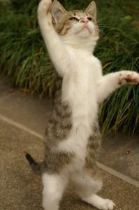 kissanpentuja hankkimassa