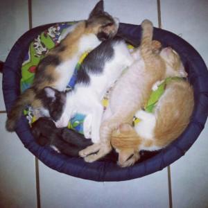 nukkuvia kissanpentuja