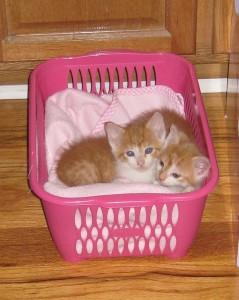 suloisia kissanpentuja