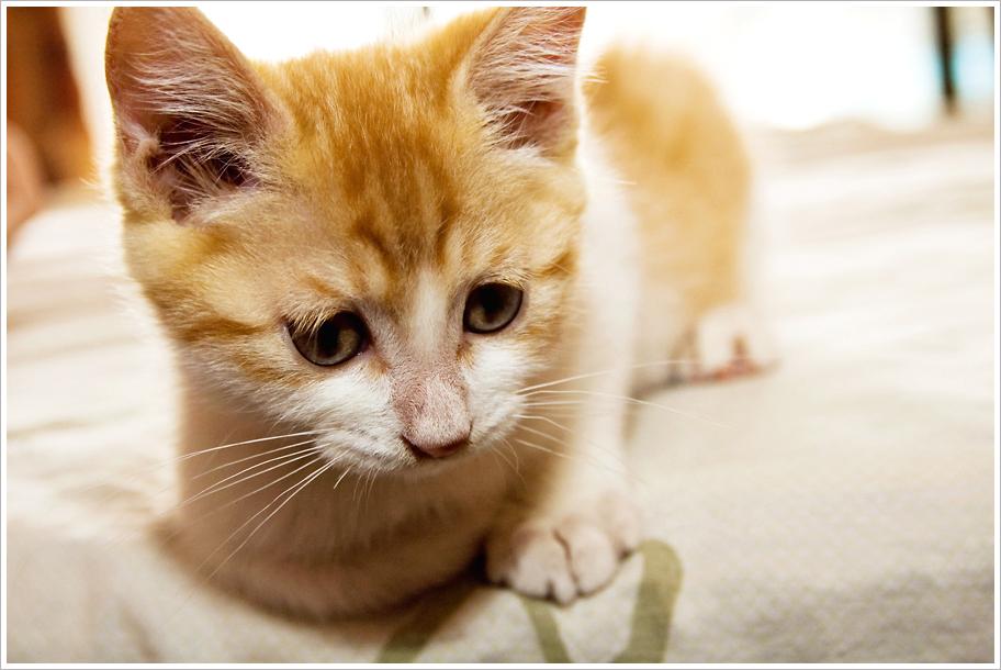 Kissa Ripuli