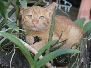 Luovutetaan kissanpentuja, kissanpentuja annetaan
